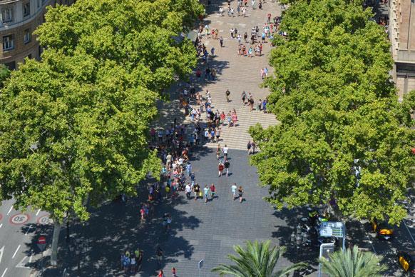trees along La Rambla in Barcelona